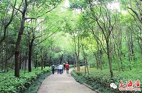 (有空请看:)申城首个慢行绿道悄然开放 - Genrong - 胡根荣的博客Genrongs blog